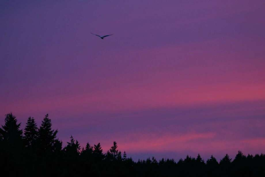 A seagull flies over a bay on Stuart Island during sunset. On Monday President Barack Obama will create a 955-acre national monument in the scenic San Juan Islands.  Photo: JOSHUA TRUJILLO / SEATTLEPI.COM