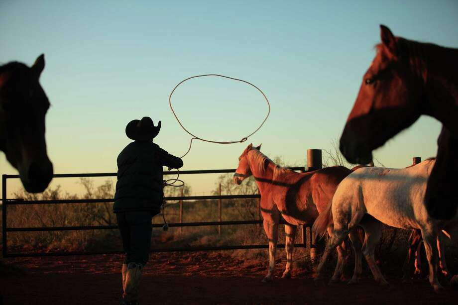 """A cowboy ropes a horse in this 2008 image from his book: '""""Under one Fence: The Waggoner  Ranch Legacy"""". Photo: Wyman Meinzer / © 2008 Wyman Meinzer"""