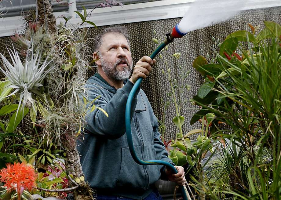 Martin Grantham is greenhouse manager at S.F. State. Photo: Brant Ward, The Chronicle