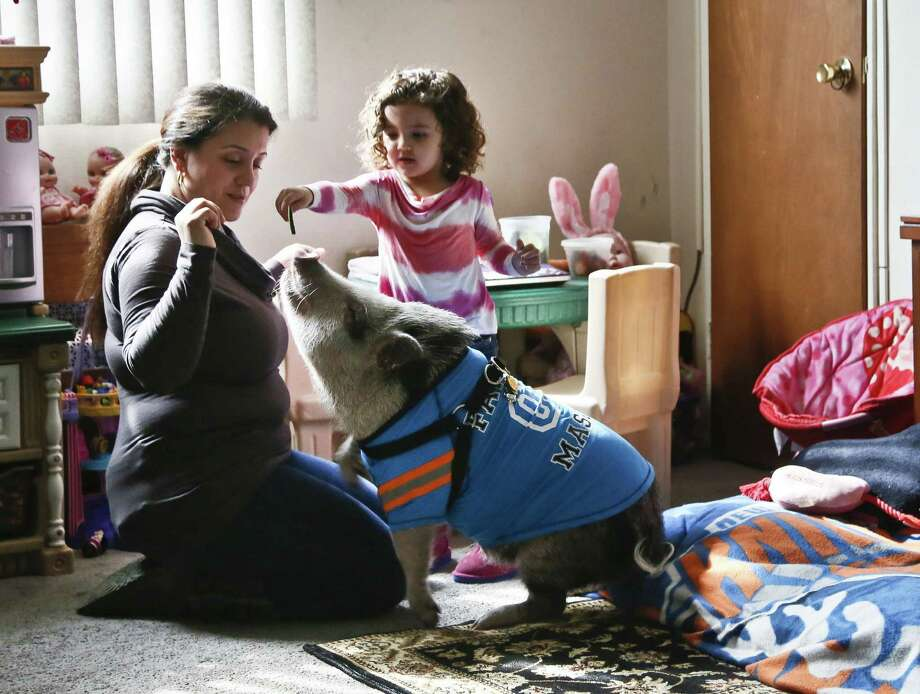 Danielle Forgione, with her daughter Olivia, has until this summer to remove Petey, the family's pet pig, or authorities will do it for her, they say. Photo: Bebeto Forgione / Associated Press