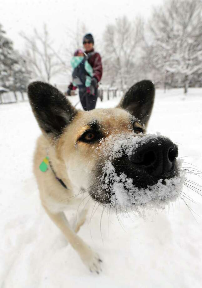 Sara Guren and daughter, Stella Beeman, 1, watch their dog Rocky in the snow at North Boulder Park in Boulder, Colo. on Saturday, March 23, 2013. (AP Photo/The Daily Camera, Cliff Grassmick) NO SALES Photo: Cliff Grassmick, Associated Press / Daily Camera