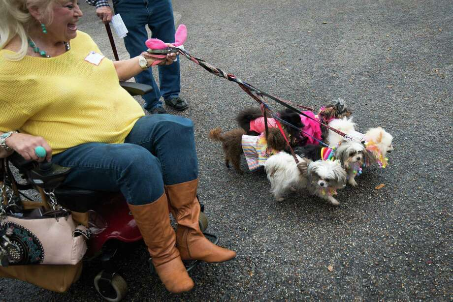 "Candy Bywaters brings six of her dogs to the annual  Blessing of the Animals at Bellaire United Methodist Church.  ""It's like the Iditarod,"" Bywaters joked of her group of dogs, ""if the battery on my wheelchair goes out, I'm good to go.""  Bywaters owns 32 dogs, most of them, like the six she brought for the blessing, are therapy animals she uses in her work with Faithful Paws. Photo: Smiley N. Pool, Houston Chronicle / © 2013  Houston Chronicle"