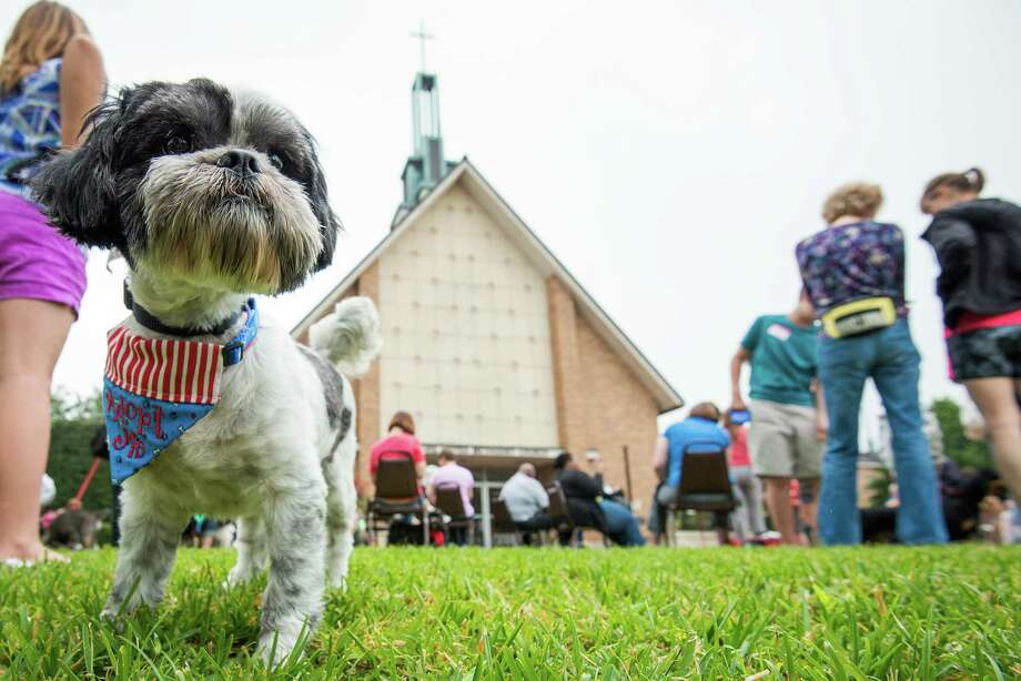 Dogs and their owners wait for services to begin during the annual  Blessing of the Animals at Bellaire United Methodist Church. Photo: Smiley N. Pool, Houston Chronicle / © 2013  Houston Chronicle