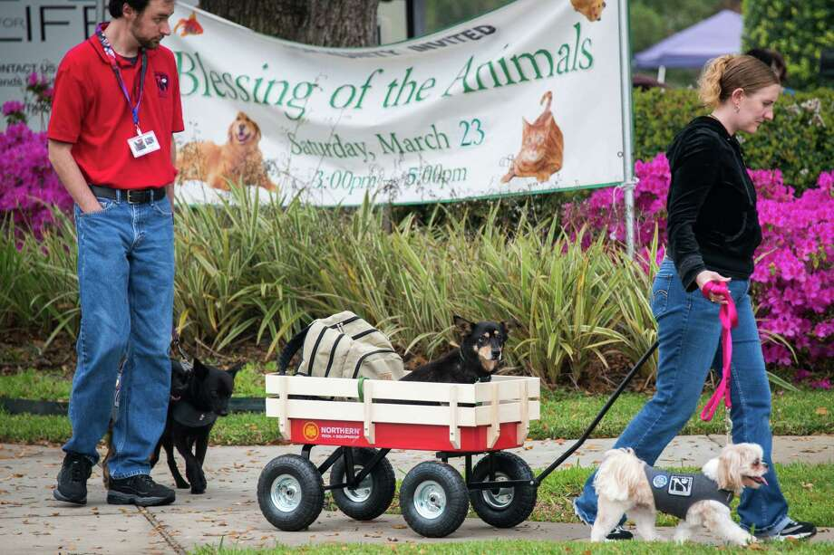Chirstopher Butler and Sarah Ibison bring, their dogs, from left, Raven, Khaos and Godiva to the annual  Blessing of the Animals at Bellaire United Methodist Church. Photo: Smiley N. Pool, Houston Chronicle / © 2013  Houston Chronicle