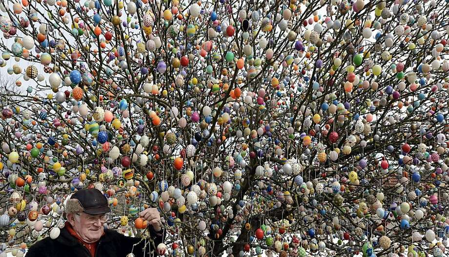 Pensioner Volker Kraft stands in front of his apple tree, which he and his family have decorated with 10.000 Easter eggs on March 24, 2013 in Saalfeld, Germany. The family started decorating an apple tree with painted hen's eggs in their garden in 1965 as amusement for child and grandchildren, now it is an attraction that draws thousands of visitors and tourists to the garden of the family.  Photo: Thomas Lohnes, Getty Images