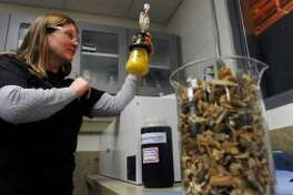 Research continues into the elusive formula for cellulosic ethanol (AP)
