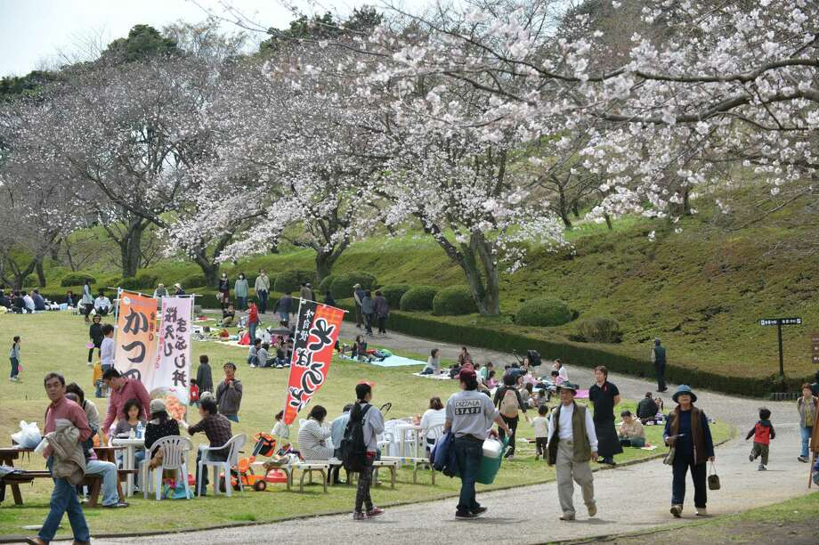 People relax near fully bloomed cherry blossom trees in Fujinomiya, about 160 kms west of Tokyo on March 23, 2013. Tokyo's cherry trees were in stunning full bloom on March 22, Japan's weather agency said, marking the second earliest blossoming in the capital on record. Photo: KAZUHIRO NOGI, Getty Images / 2013 AFP