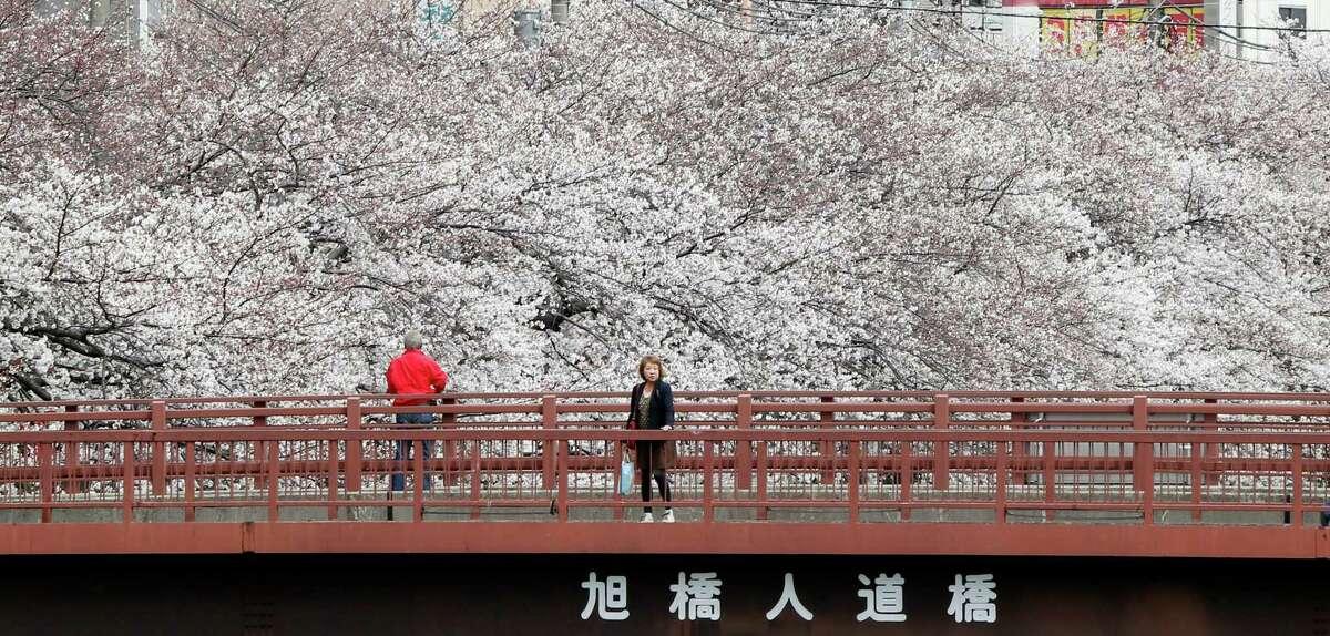 People enjoy the blooming cherry blossoms in Yokohama, Saturday, March 23, 2013. (AP Photo/Koji Sasahara)