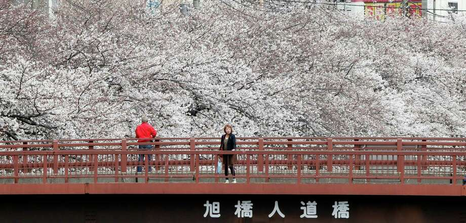 People enjoy the blooming cherry blossoms in Yokohama, Saturday, March 23, 2013. (AP Photo/Koji Sasahara) Photo: Getty Images