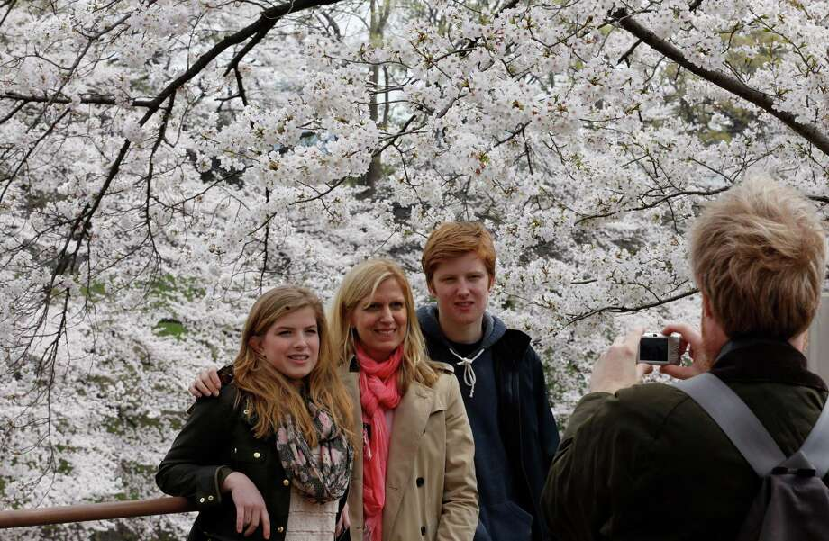 Foreign tourists take a photo in front of the blooming cherry blossoms near the Chidorigafuchi Imperial Palace moat in Tokyo, Sunday, March 24, 2013. (AP Photo/Shizuo Kambayashi) Photo: Getty Images