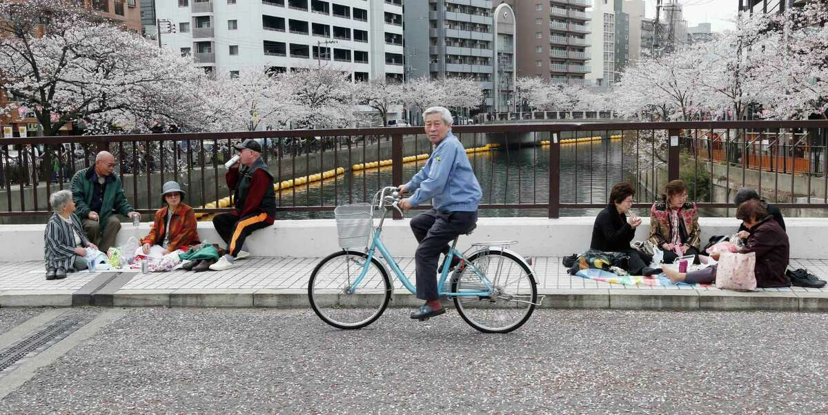 People have lunch on a road covered with the petals of cherry blossoms in Yokohama, Saturday, March 23, 2013. (AP Photo/Koji Sasahara)