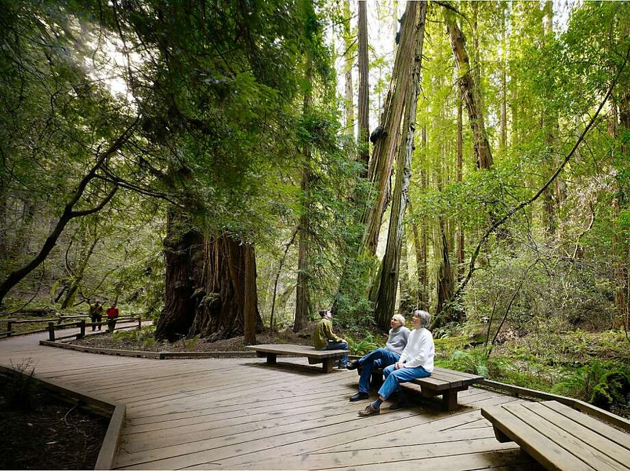 Golden Gate National Recreation Area has many attractions, with Muir Woods among the most beloved. The GGNRA's partners have won Stewardship Excellence Awards from the Cultural Landscape Foundation. Photo: Golden Gate National Parks Conse