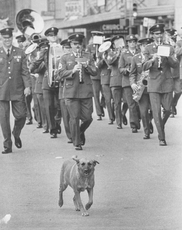 Battle of Flowers 1982: Brownie the dog, owned by 9-year-old Robert Garza, leads the Fort Sam Houston band near Frost Bank. Photo: San Antonio Express-News File Photo