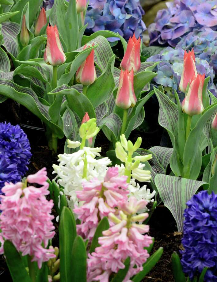 One of the many floral displays March 22, 2013,   at the Capital District Garden & Flower Show at the McDonough Sport Complex in Troy, N.Y.  The show continues through Sunday.  (Skip Dickstein/Times Union) Photo: SKIP DICKSTEIN, ALBANY TIMES UNION / 10021625A