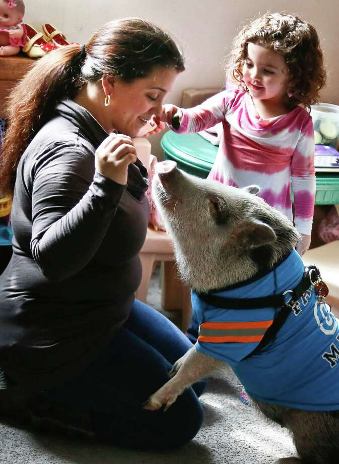 Danielle Forgione, left, and her daughter Olivia, 3, play with Petey, the family's pet pig, on Thursday, March 21, 2013, in the Queens borough of New York. Forgione is scrambling to sell her second-floor apartment after a neighbor complained about 1-year-old Petey the pig to the co-op board. In November and December she was issued city animal violations and in January was told by both the city and her management office that she needed to get rid of the pig. Photo: Bebeto Matthews, AP / AP