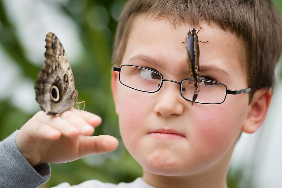 "How I met your moth: Some of the ""Sensational Butterflies"" at the Natural History Museum in London's lepidoptery exhibit make a new friend. Photo: Leon Neal, AFP/Getty Images"