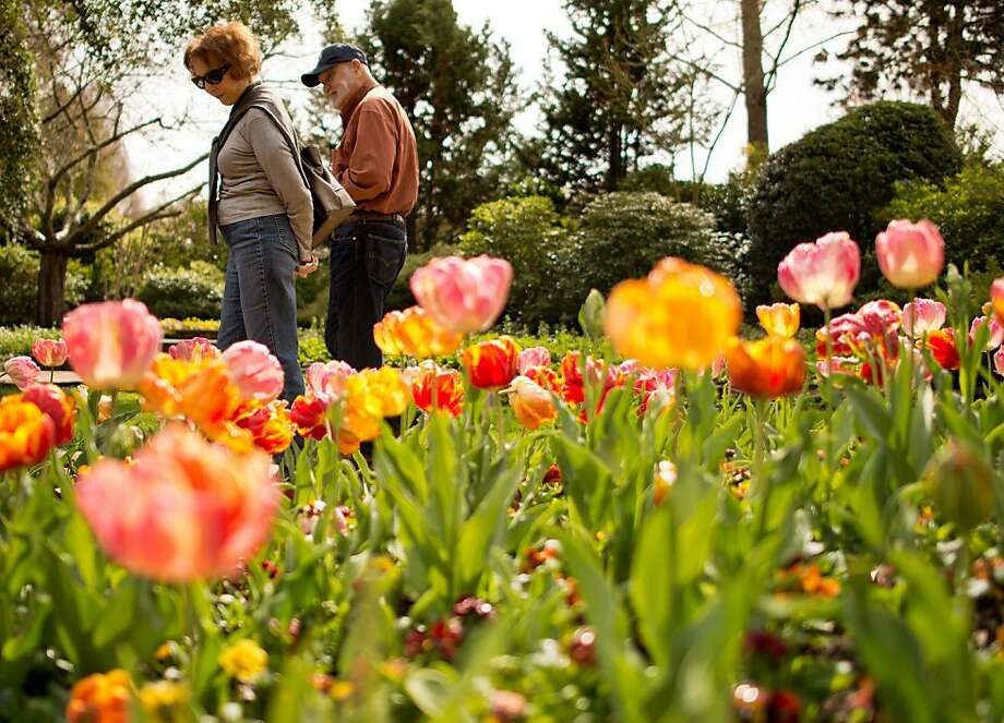 Jan and Bob Hagopian, of Modesto, Calif., walk past a bed of parrot tulips at Ferrari-Carano Vineyards and Winery in Healdburg, Calif., on March 14, 2013. Photo: Alvin Jornada, Special To The Chronicle