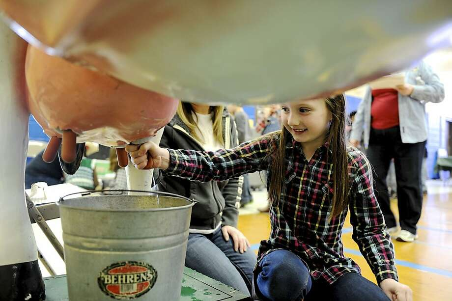 Do unto udders: Hallie McCracken squeezes a cow's teat as she and other students at Spottsville Elementary School learn how to milk a cow, grind wheat, plant seed and many other agriculture activities in Spottsville, Ky. Photo: Darrin Phegley, Associated Press