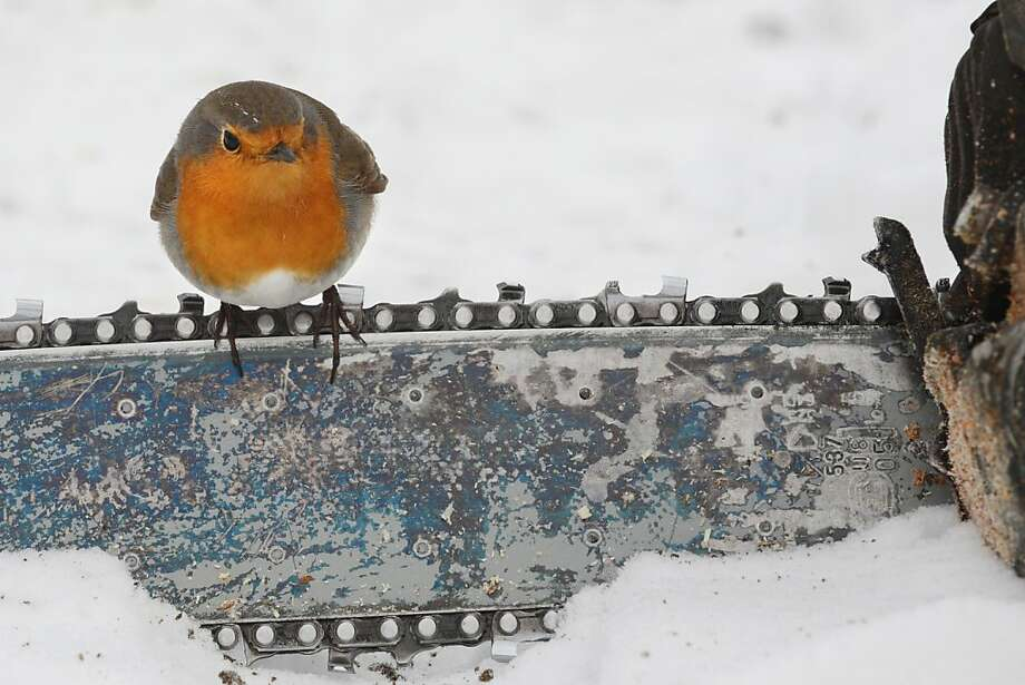 We just sawed a robin! Sigmaringen, Germany, welcomes a sign of spring even though the ground remains covered with snow. Photo: Felix Kastle, AFP/Getty Images