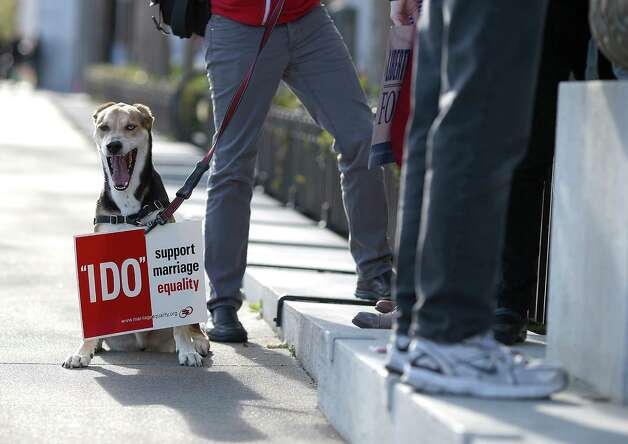 A dog wears a sign in support of same-sex marriage during a rally in support of marriage equality on March 26, 2013 in San Francisco. Photo: Justin Sullivan, Getty Images / 2013 Getty Images