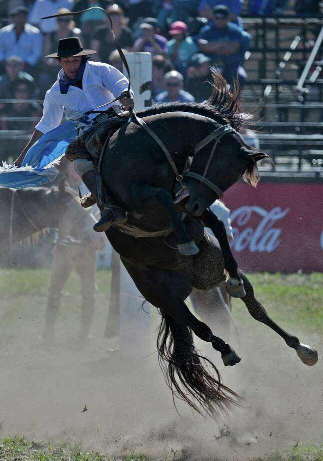 A gaucho rides a bucking colt during the traditional rodeo week in Montevideo on March 27, 2013. Photo: PABLO PORCIUNCULA, AFP/Getty Images / Pablo Porciuncula