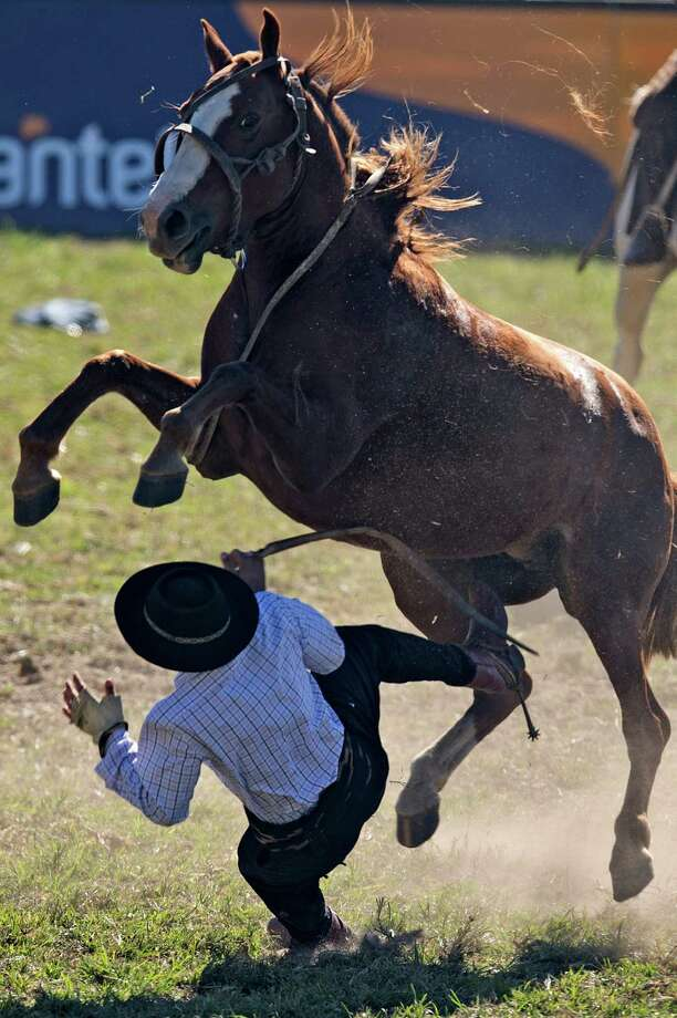 A rider falls from a bucking colt during the traditional rodeo week in Montevideo on March 27, 2013. Photo: PABLO PORCIUNCULA, AFP/Getty Images / Pablo Porciuncula