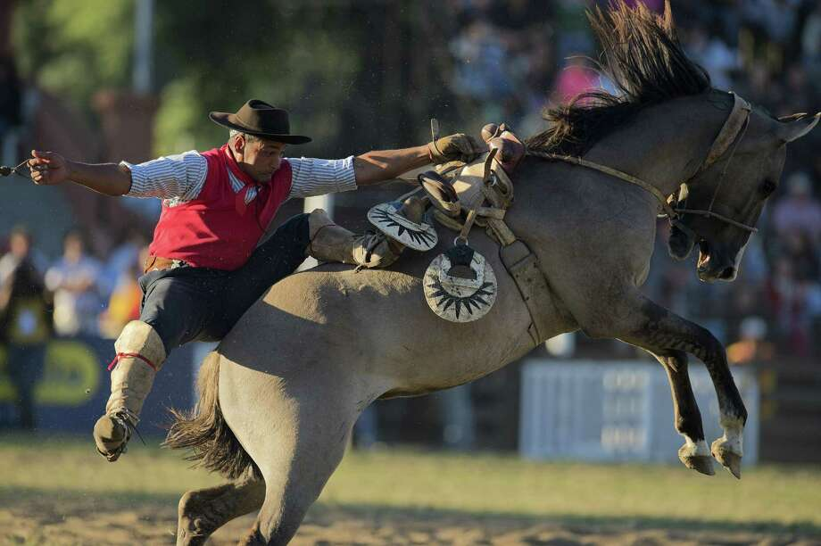 A gaucho falls from a bucking colt during the traditional rodeo week in Montevideo on March 27, 2013. Photo: PABLO PORCIUNCULA, AFP/Getty Images / AFP