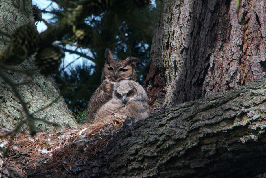 Intimate shot: Golden Gate Park owls