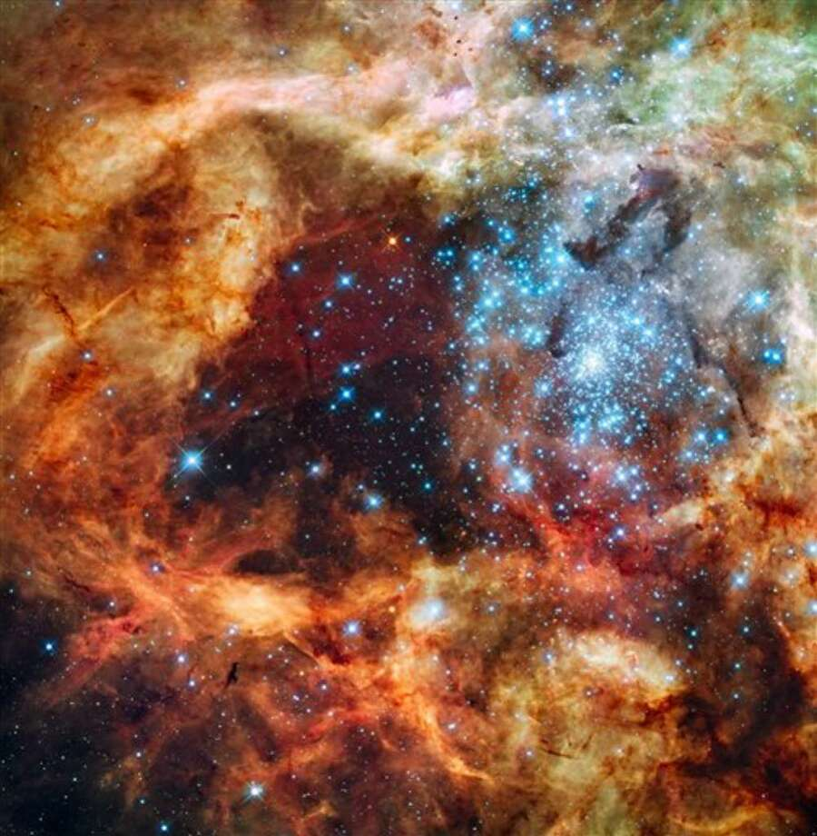 This image provided by NASA's Hubble Space Telescope Tuesday Dec. 15, 2009 shows hundreds of brilliant blue stars wreathed by warm, glowing clouds. The festive portrait is the most detailed view of the largest stellar nursery in our local galactic neighborhood. The massive, young stellar grouping, called R136, is only a few million years old and resides in the 30 Doradus Nebula, a turbulent star-birth region in the Large Magellanic Cloud (LMC), a satellite galaxy of our Milky Way. There is no known star-forming region in our galaxy as large or as prolific as 30 Doradus. (AP Photo/NASA) Photo: Anonymous, ASSOCIATED PRESS / AP2009