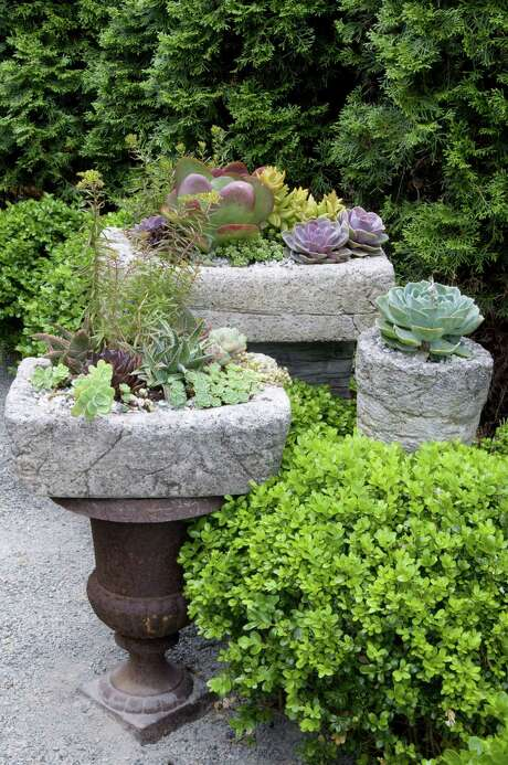 Create your own rustic, featherweight troughs and fill them with an assortment of succulents. Photo by Allan Mandell