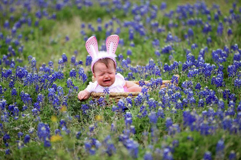 Jaycee Philen, 9-months, of Tomball, cries as she gets her photo taken by her mom, Jamie Philen in the blue bonnets near Chappell Hill on Highway 290, Thursday, March 28, 2013, in Chappell Hill . Photo: Karen Warren, Houston Chronicle / © 2013 Houston Chronicle