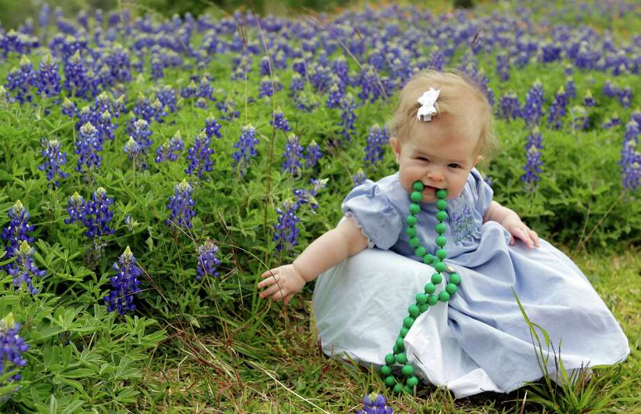 Six-month-old daughter, Avery Miley, poses as her mother, Maia Miley, tries to take her photo among the bluebonnets at Memorial Park Thursday, March 28, 2013, in Houston. Photo: Melissa Phillip, Houston Chronicle / © 2013  Houston Chronicle