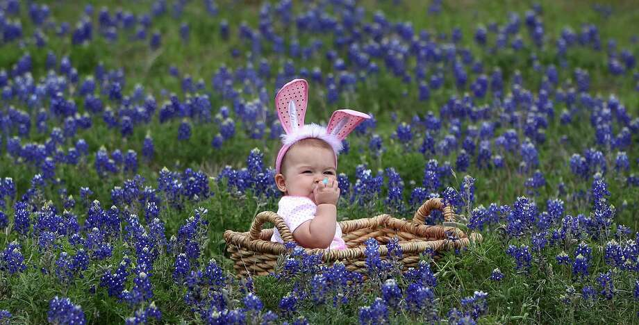Jocelynn Masvero, 10 1/2 months, o Tomball, gets her photo taken in the blue bonnets near Chappell Hill on Highway 290, Thursday, March 28, 2013, in Chappell Hill . Photo: Karen Warren, Houston Chronicle / © 2013 Houston Chronicle