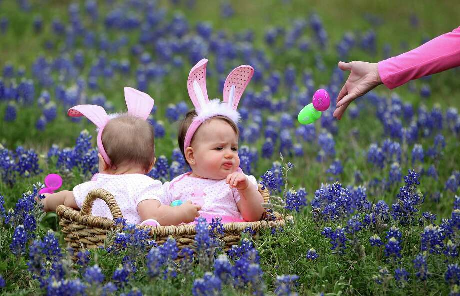 Jocelynn Masvero, 10 1/2 months, left, of Tomball,  gets her photo taken with her cousin, Jaycee Philen, 9-months,  as Amy Masvero tries to get their attention with easter eggs in the blue bonnets near Chappell Hill on Highway 290, Thursday, March 28, 2013, in Chappell Hill . Photo: Karen Warren, Houston Chronicle / © 2013 Houston Chronicle