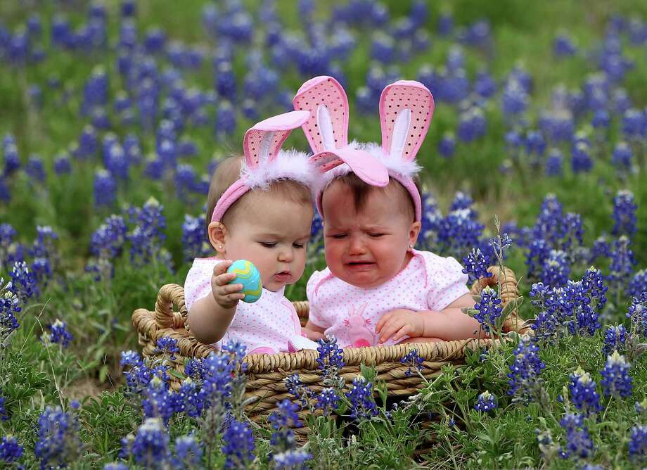 Jaycee Philen, 9-months,of Tomball right, starts to cry as she and her cousin, Jocelynn Masvero, 10 1/2 months get their photos taken in the blue bonnets near Chappell Hill on Highway 290, Thursday, March 28, 2013, in Chappell Hill . Photo: Karen Warren, Houston Chronicle / © 2013 Houston Chronicle