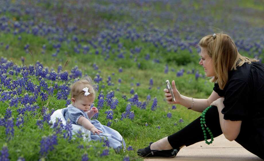 Maia Miley of Houston works to take photos of her six-month-old daughter, Avery Miley, among the bluebonnets at Memorial Park Thursday, March 28, 2013, in Houston. Photo: Melissa Phillip, Houston Chronicle / © 2013  Houston Chronicle