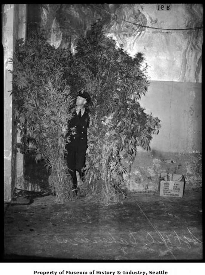 Police sergeant with confiscated marijuana plants, Seattle, 1939. (Copyright MOHAI, Seattle Post-Intelligencer Collection,1986.5.5397.1.) Photo: PI Staff / SL