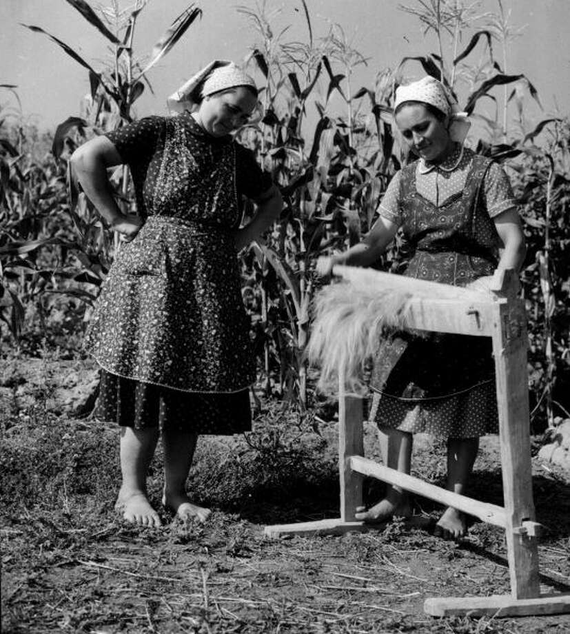Women dress their hemp crop before weaving the plant into linen in August 1958.Photo By Keystone Features/Getty Images