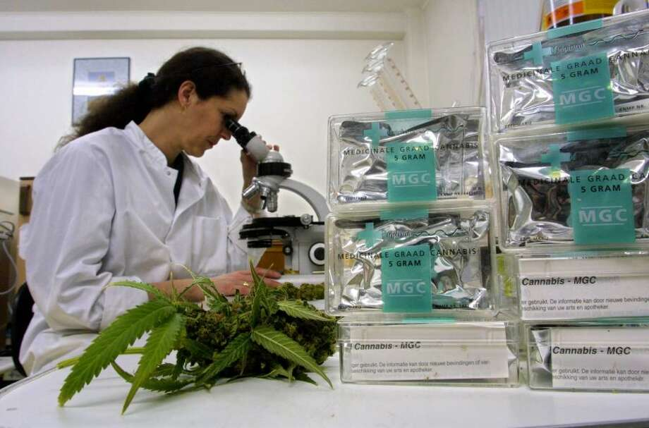 An assistant studies marijuana/cannabis leaves in the Maripharma Laboratory February 15, 2002 in Rotterdam, The Netherlands. The Dutch government is the first in the world to officially approve the cultivation and sale of cannabis products to pharmacies for medical purposes.Photo By Michel Porro/Getty Images