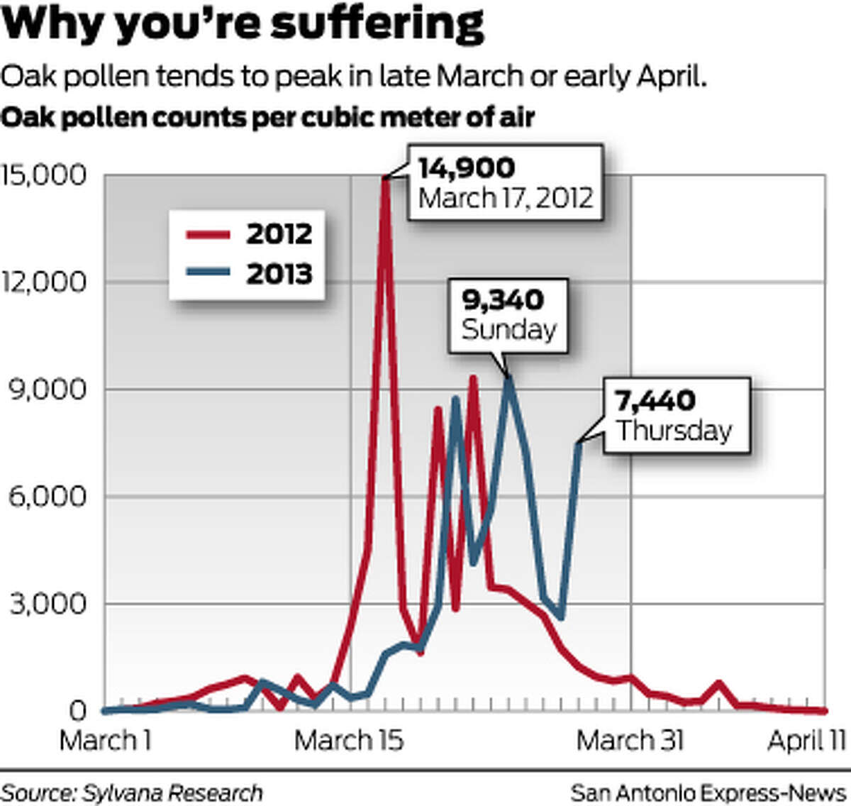 Why you're suffering Oak pollen tends to peak in late March or early April. Oak pollen counts per cubic meter of air