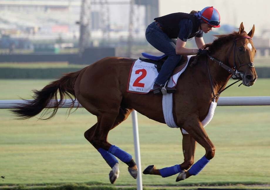 Animal Kingdom from the U.S. works out at the Meydan racecourse two days before the Dubai World Cup, the world's richest horse racing, in Dubai, United Arab Emirates, Thursday, March 28, 2013. (AP Photo/Kamran Jebreili) Photo: Kamran Jebreili