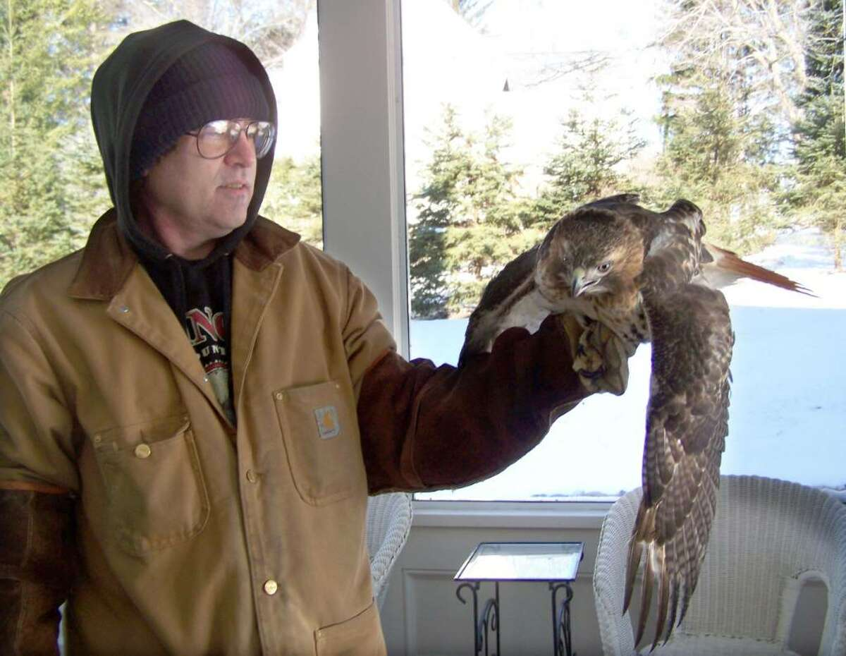 Danbury Nuisance Control Expert Craig Lewis holds a red-tailed hawk that crashed through a screened porch in Ridgefield. After hours in involuntary confinement on the porch, the hawk flew away, uninjured.
