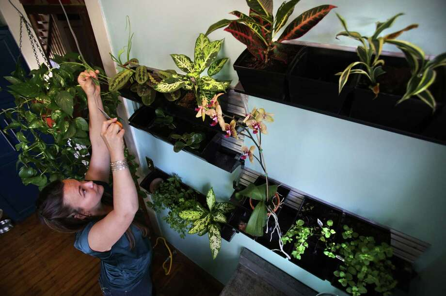 Sharee Neff cuts herbs from her vertical kitchen garden. Photo: Bob Owen / San Antonio Express-News