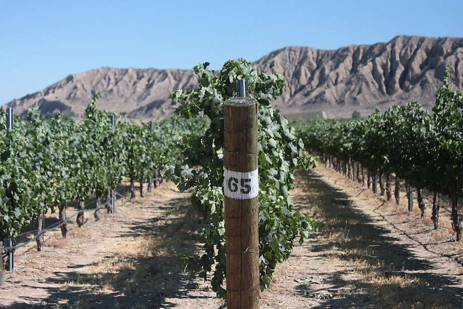 Grenache grown in spots like this, the Santa Barbara Highlands vineyard in the high-desert town of Ventucopa, can adapt to a wide range of often arid climates. Photo: Jon Bonne