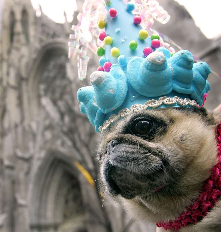 A pooch sporting Peeps on a colorful cone shaped hat watches the crowd in front of St.Patricks Cathedral on Fifth Avenue March 27, 2005 in New York City. Hundreds of people gathered along the avenue sporting all types of Easter outfits. Photo: Stephen Chernin, Getty Images / 2005 Getty Images