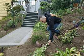 Marty Combs maintains the community garden on the Eugenia Stairs in the Bernal Heights neighborhood of San Francisco, Calif. on Thursday, March 28, 2013.