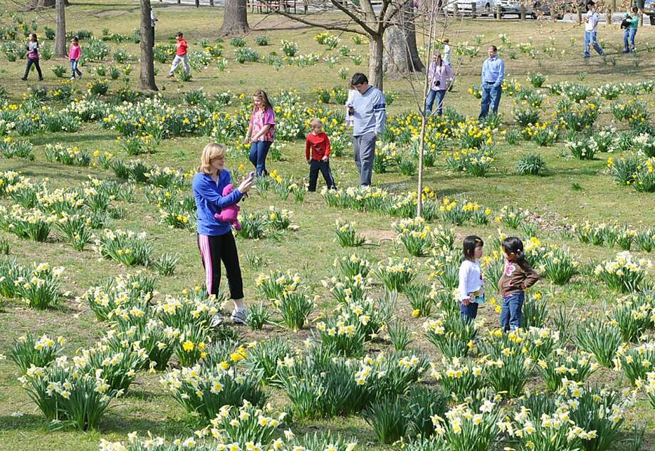 Mild weather finally provided a comfortable opportunity for familes to make pretty pictures of their loved ones in the blooming daffodils at Central Park Friday March 29, 2013 in Ashland, Ky.  (AP Photo/The Independent, Kevin Goldy) Photo: Kevin Goldy, Associated Press