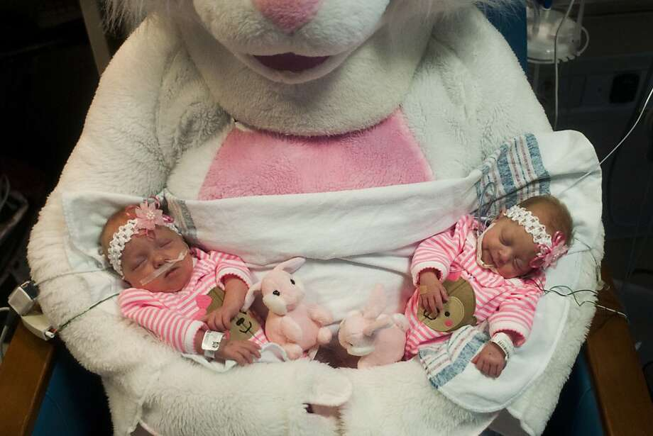 Six-week-old twins Piper, left, and Penelope Richert are held by the Easter Bunny Friday, March 29, 2013 at Hurley Children's Hospital in Flint, Mich. Renay Gagleard, administrator of Women and Children's Services at Hurley, dressed as the Easter Bunny and visited kids in the Children's Hospital throughout the morning.  (AP Photo/The Flint Journal, Jake May) LOCAL TV OUT; LOCAL INTERNET OUT Photo: Jake May, Associated Press