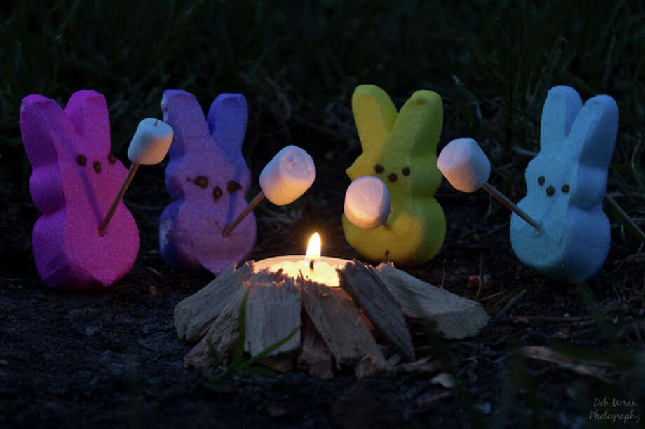 Peeps roasting marshmallows (their cousins!) Photo: Deb Moran