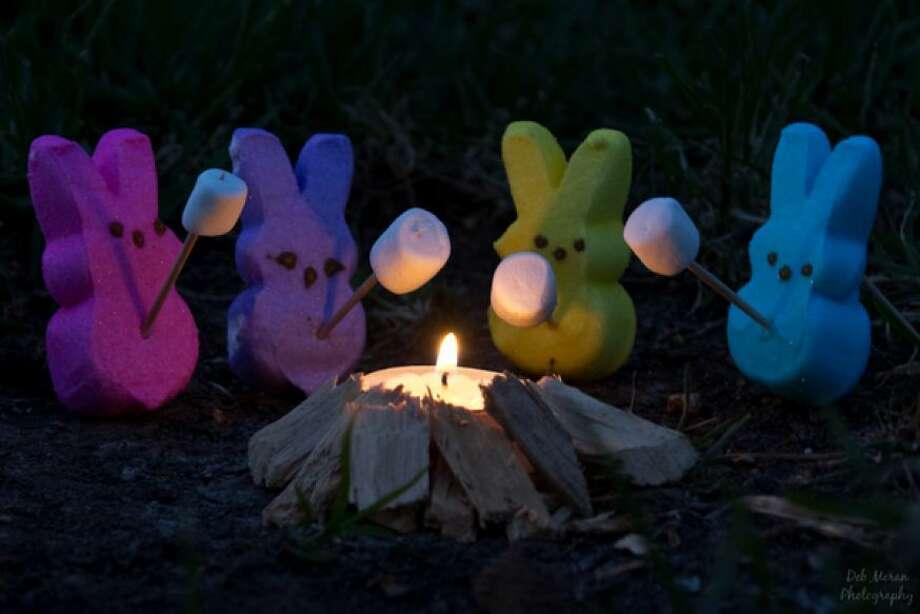 Peeps roasting marshmallows (their cousins!)